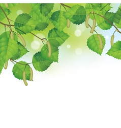 Birch leaves background vector