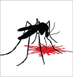 Mosquito drinks blood vector