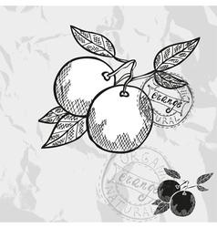 Hand drawn decorative orange fruits vector