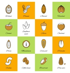 Set of nuts icons vector