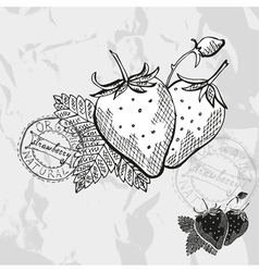 Hand drawn decorative strawberries vector