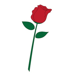 Red rose on white background vector