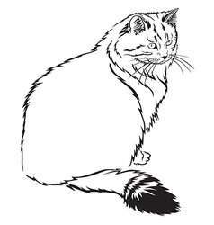 Cat contour vector