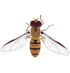 Bee1v vector