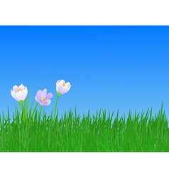 Spring flowers and grass illustration vector