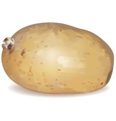 New potato tuber vector