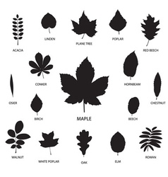 Collection of leaf silhouettes vector