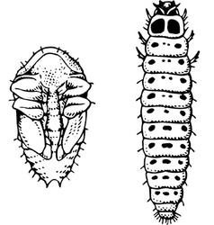 Larva and worm meligethes aeneus vector