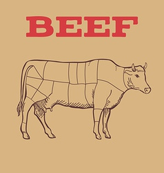 Scheme of beef cuts vector