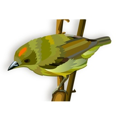 Green bird with orange stripe vector