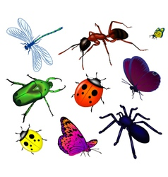 Bugs and insects vector