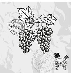 Hand drawn decorative grapes vector