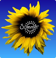 Sunflower summer concept vector