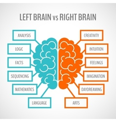 Brain hemispheres infographics vector