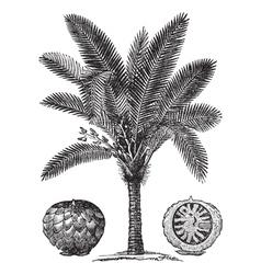 Sago palm sketch vector