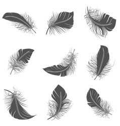 Feather black set vector