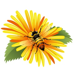 Bee on a yellow daisy vector