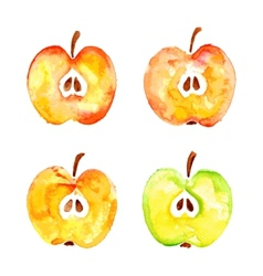 Watercolor prints cut four apples vector