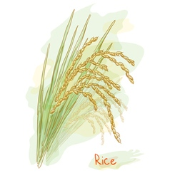Rice watercolor style vector