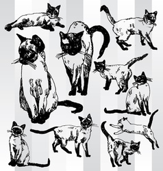 Some cats hand drawn vector