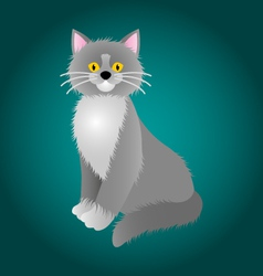 Gray cat -with -white chest vector