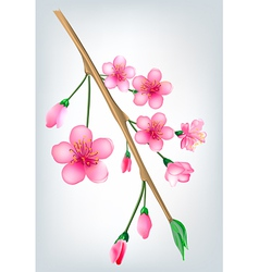 Sakura blossom branch vector