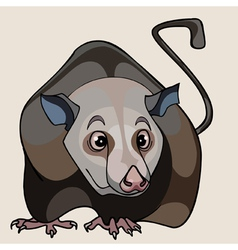 Cartoon rat brown vector