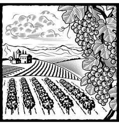 Vineyard landscape black and white vector