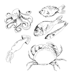 Seafood vector