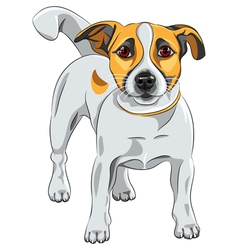 Dog jack russell terrier vector