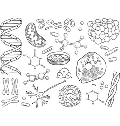 Biology and chemistry icons isolated vector