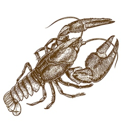 Engraving crayfish vector