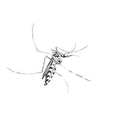 Sketch of mosquito on white vector