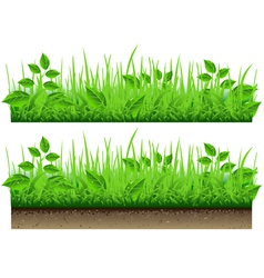 Grass border isolated on white background vector