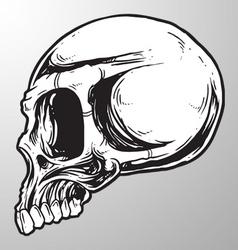 Skull sketch design element vector