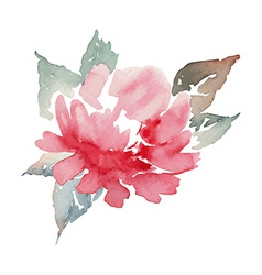 Peonies watercolor vector