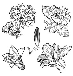 Set of floral design vector