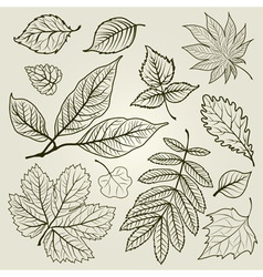 Autumn leaf design vector