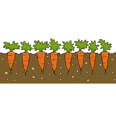 A bed of carrot vector