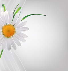 Grey abstract background with daisy and grass vector