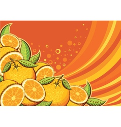Orange fruits background vector