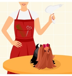 Professional dog grooming for yorkshire terrier vector