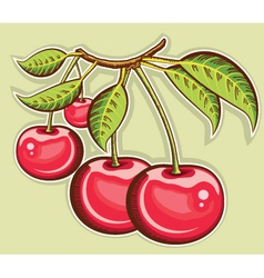 Red cherries vector