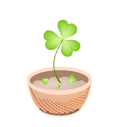 A brown basket of four leaf clovers vector