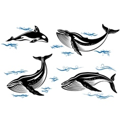 Cartoon sea whales vector