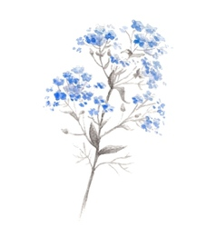 Watercolor branch of blue forget-me-flower vector