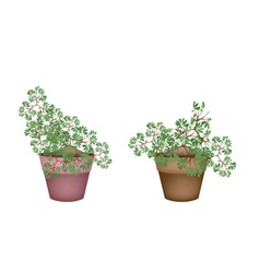 Two green trees and plants in ceramic flower pots vector
