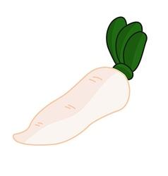 White radish vector