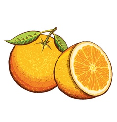 Orange fruits isolated vector