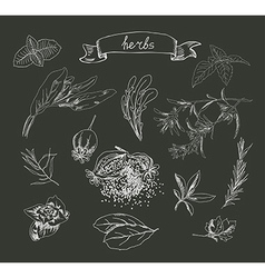 Set of herb sketches vector